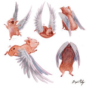 Flying Pig_All Together.jpg