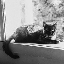 blackie.jpg
