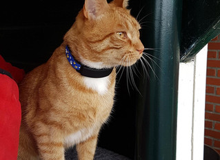 PawTrax Halo & TAGZ GPS Collar reviews