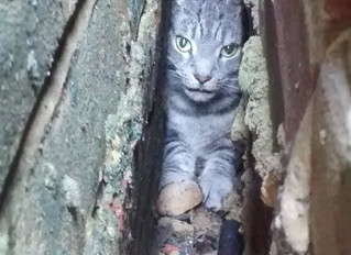 Cat-astrophe strikes for trapped cats