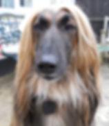 Dog with PawTrax TAGZ GPS