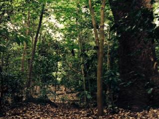 森を彷徨う・・・