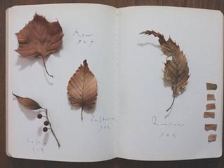 filithematerira   フィリテマテリラ