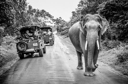 Sri Lanka_AA-181.jpg