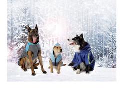 3 Dogs in Winter Jackets
