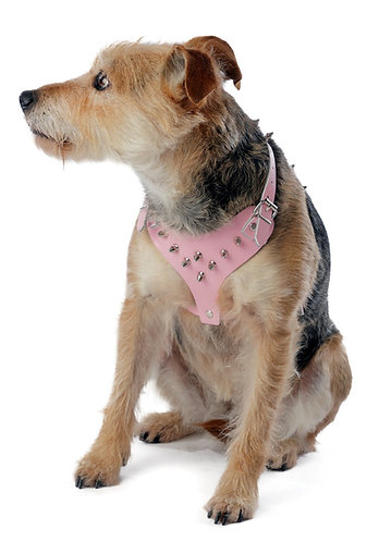 Front view of dog wearing pink leather harness