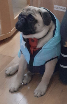 Ronnie in His New Puffy Jacket
