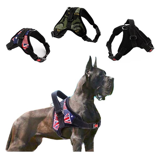 View of military umion jack and black harness