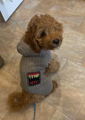 Dexter the cute little dog