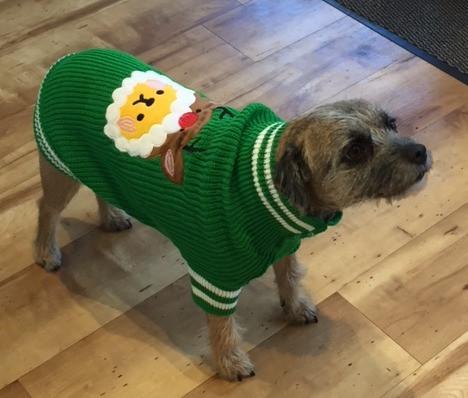 Christmas Cutie Jumper