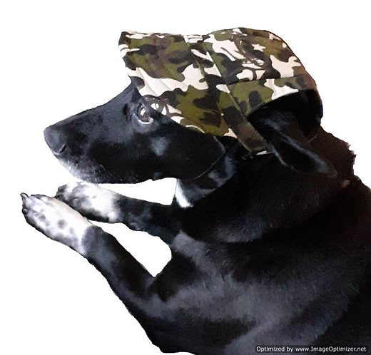 View of camouflage cap on dog