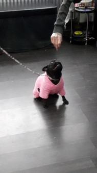 Happy Dancing Pug