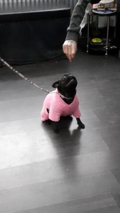Happy Dancing Pug