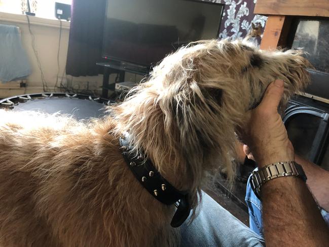 Sambo's New Collar