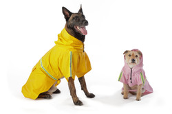 Rain jackets for dogs