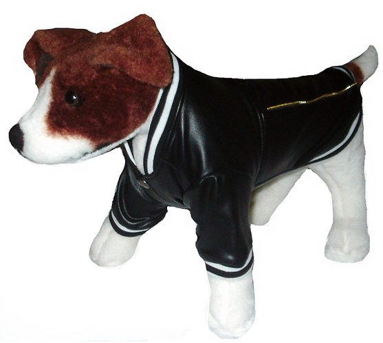 View of faux-leather jacket on dog