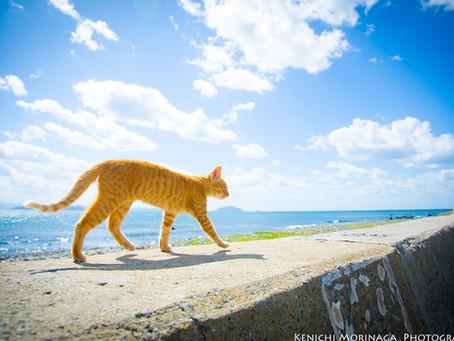 ネコの島、相島への行き方