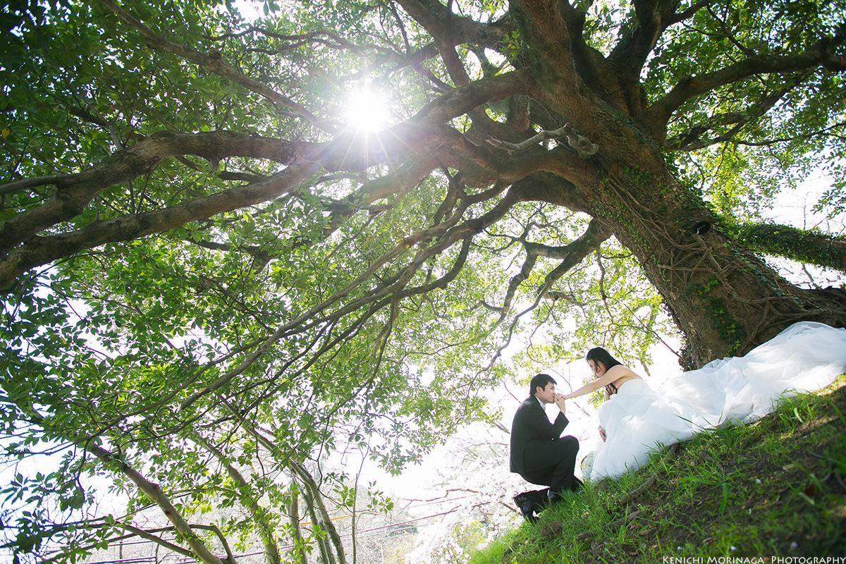 pre wedding in Spring season