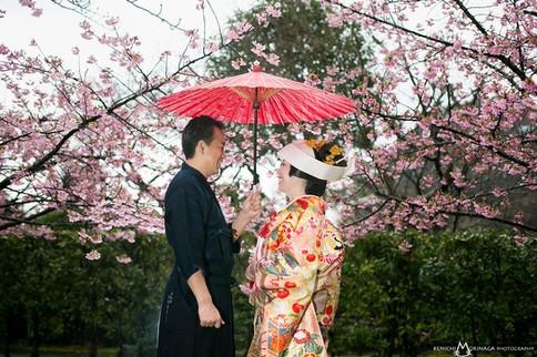 小倉城庭園 白野江植物公園 桜 北九州 福岡