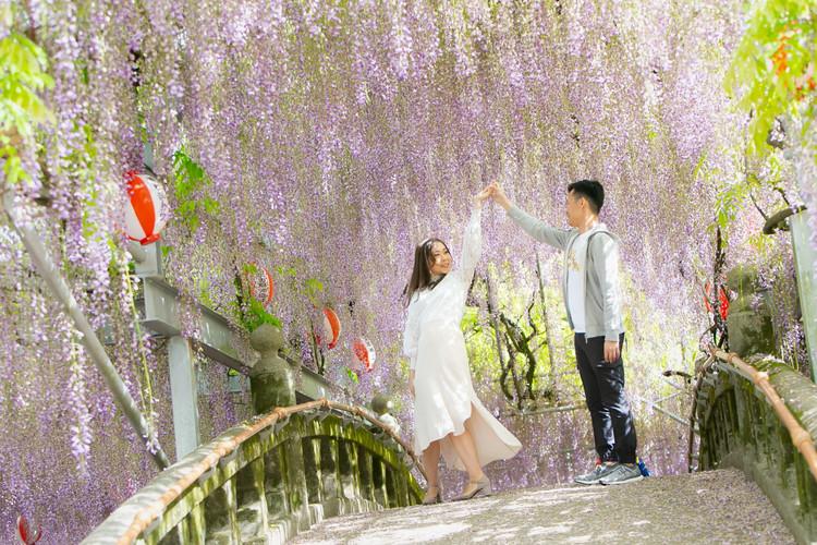 中山の大藤 藤の花 福岡 | Feel So High! 森永健一Photography | 日本