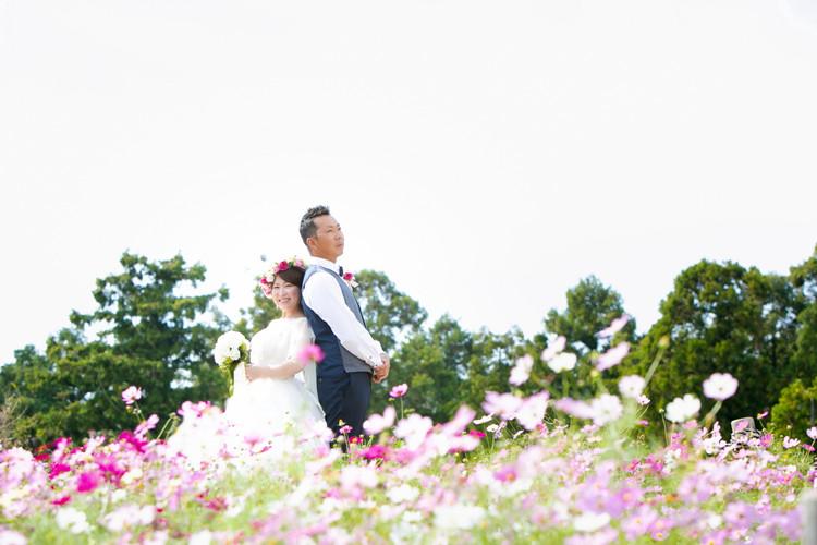 白木峰高原 コスモス 長崎 | Feel So High! 森永健一Photography | 日本