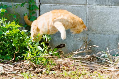 相島 福岡のネコがいる風景 猫写真家・森永健一(モリケン) ネコの島 猫島