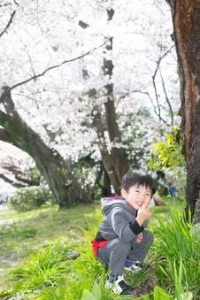 舞鶴公園 桜 福岡 福岡結婚写真 ファミリーフォト 家族写真  前撮りロケーションフォト デートフォト エンゲージメントフォト family photo pre-wedding fukuoka sakura ブライダルカメラマン森永健一 from Singapore
