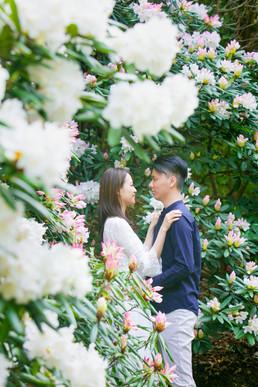 白野江植物公園 桜・夕焼け