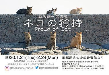 proudofcat.jpg