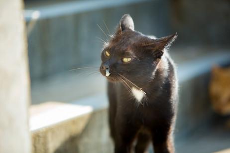 相島 福岡のネコがいる風景 クロイチ 猫写真家・森永健一(モリケン) ネコの島 猫島
