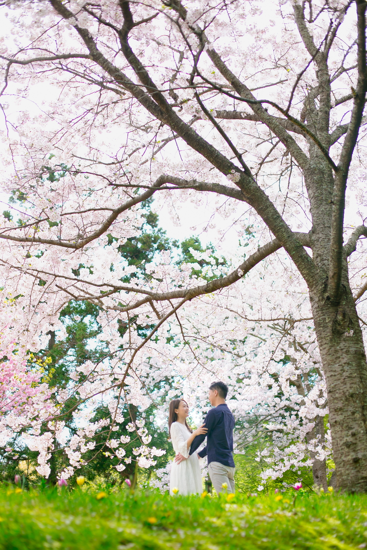 Pre-wedding photo  with Sakura