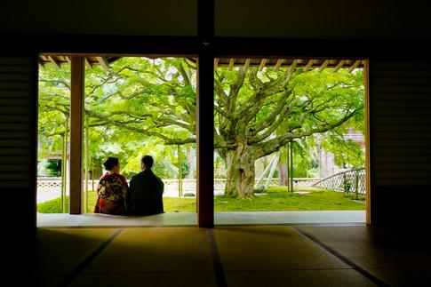 雷山千如寺大悲王院 のこのしまアイランドパーク コスモス 夕焼け 福岡