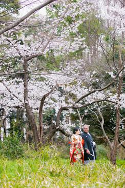 水元公園 埼玉 横溝屋敷 神奈川 桜