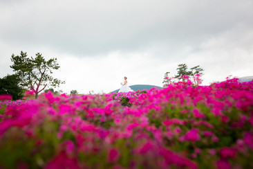 河内藤園・くじゅう花公園