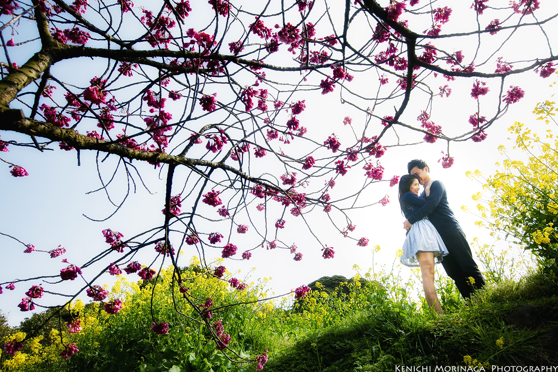 sakura pre wedding in Fukuoka Japan.