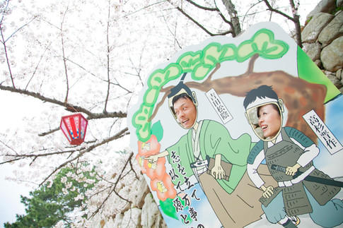 萩 桜 山口