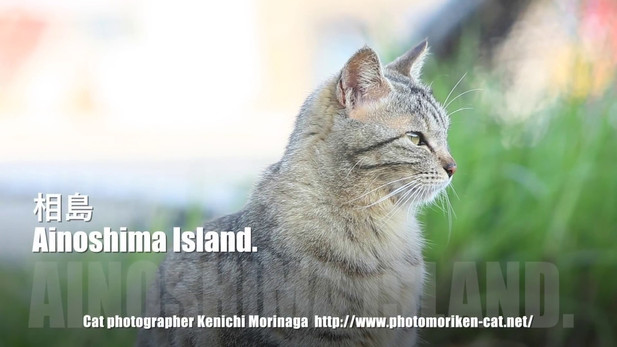 相島 福岡のネコがいる風景 猫写真家・森永健一(モリケン)
