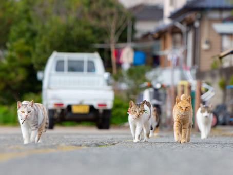 熊本のネコの島、湯島への行き方