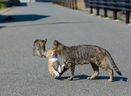 How to get to cat Island. Ainoshima Island.