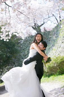 舞鶴公園 桜 のこのしまアイランドパーク 桜 菜の花