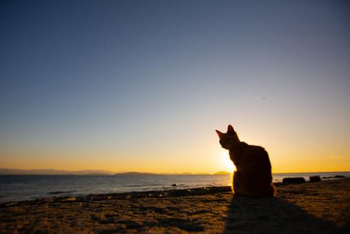 相島 福岡のネコがいる風景 猫写真家・森永健一(モリケン)Cat Island Ainoshima Island Shingu Fukuoka Japan.