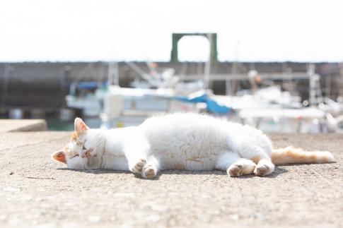 湯島のネコがいる風景 猫写真家・森永健一(モリケン)Cat Island Yushima Island Kami-amakusa Kumamoto Japan.
