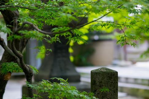 久留米日吉神社 魚よし 福岡結婚写真 ブライダルカメラマン森永健一