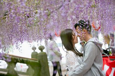 中山の大藤 柳川 相島 猫の島 福岡 wisteria 結婚写真 結婚撮影 出張撮影 前撮りロケーションフォト ブライダルカメラマン 森永健一