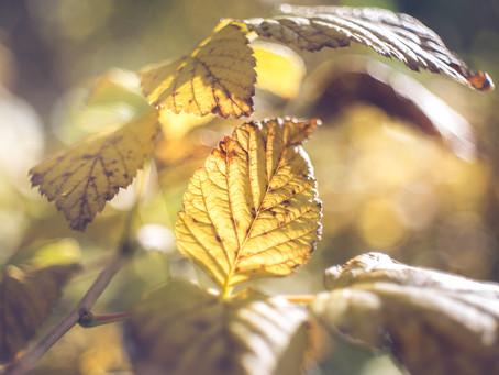 Eine Liebeserklärung an den Herbst
