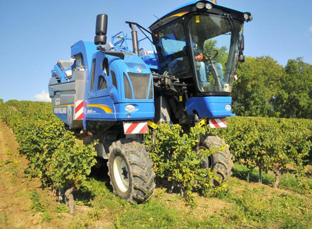 Manual or Mechanical Harvesting : Which To Choose?
