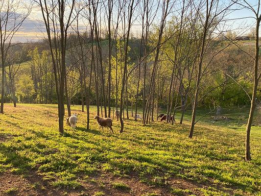 FarmMorningView.jpg