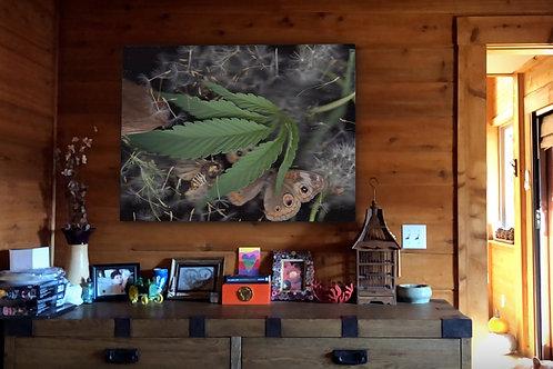 Cannabis amongst nature