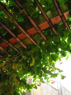Madeira, Bambú e Plantas