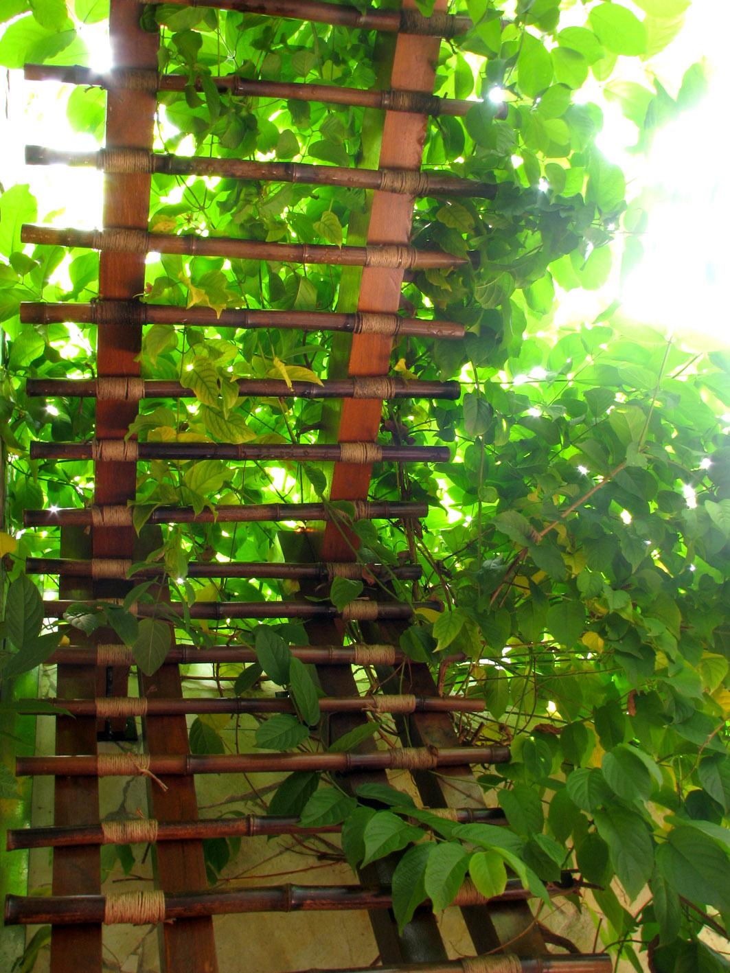 Pérgolas em Bambú